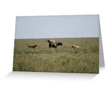 Lion kill Buffalo Greeting Card