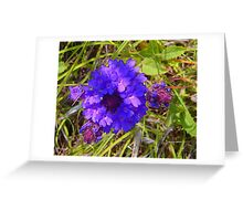 Pretty Purple Posy Greeting Card