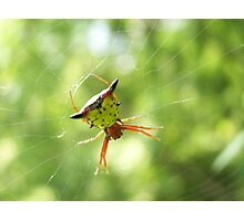 Orb Weaver Photographic Print