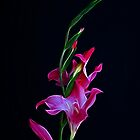 Gladiola Opening by Sandy Keeton