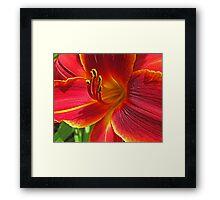 Summer Lily Framed Print