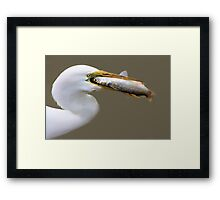 Egret eating a HUGE Fish he had just Caught Framed Print