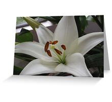 Wonderfully White With Super Stamens Greeting Card