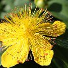 Lovely in Yellow by Esperanza Gallego