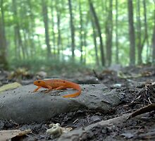 The Newt by AlGrover