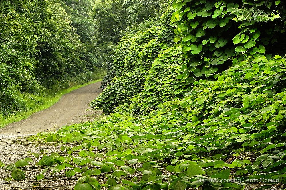 Dirty Kudzo Road by NatureGreeting Cards ©ccwri