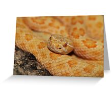 Albino Prairie Rattlesnake Greeting Card