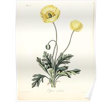 Floral illustrations of the seasons Margarate Lace Roscoe 1829 0326 Papaver Nudicaule Poster