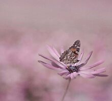 Pastel Butterfly by garts