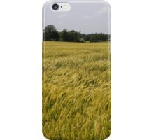 Golden Wheat Harvest, Ripening In The Wind iPhone Case/Skin