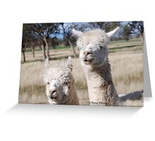 Look wandered up to us in the Ute Greeting Card