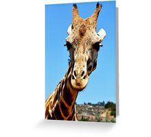 Giraffe, SD Wild Animal Park Greeting Card