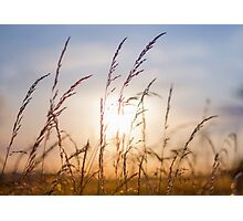Splendor in the Grass Photographic Print
