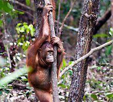Lonely ape by Jonathon Speed