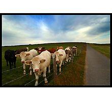 Cow Hill Photographic Print