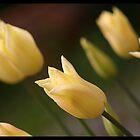 Floral I by Robert Karreman