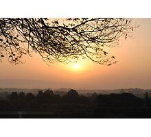 tree silhouette Photographic Print