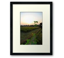overlooking the vineyard Framed Print