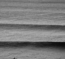 Lone Surfer by Anthony Evans