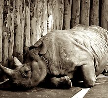 Rhino - Deep in thought.  by iLaw