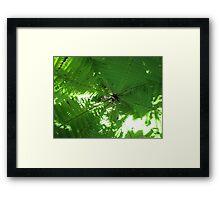 Fern Web Framed Print