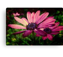 Daisies with Texture Canvas Print