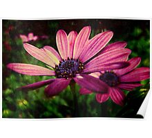 Daisies with Texture Poster