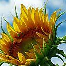 Looking Towards the Sun by Susan S. Kline