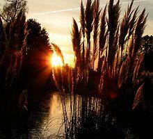 sunset between the reeds, wakehurst, sussex by MarieJones