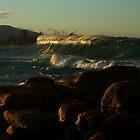 redbill beach. bicheno, tasmania by tim buckley | bodhiimages