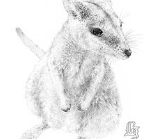 Rock wallaby (ink draft) by Laura Grogan