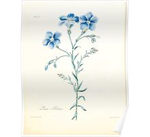 Floral illustrations of the seasons Margarate Lace Roscoe 1829 0296 Linum Narbonense Poster