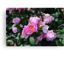 Pinky coloured Roses Canvas Print