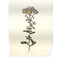 Floral illustrations of the seasons Margarate Lace Roscoe 1829 0158 Aster Amellus Poster