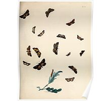 British moths and their transformations Henry Noel Humphreys and John Obadiah Westwood 1845 0153 Poster