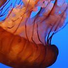 Jellyfish - Monterey Bay Aquarium by FFRPhoto