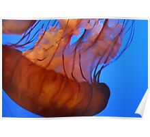 Jellyfish - Monterey Bay Aquarium Poster