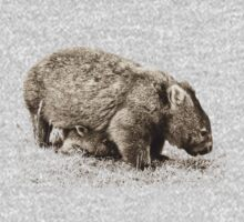 More Wombats by col hellmuth