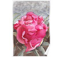 Pink Azalea Explosion Poster