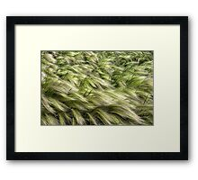 Foxtails Framed Print