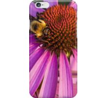 Bee on a Purple Coneflower iPhone Case/Skin