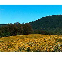 Goldenrods Versus Hills Versus Sky Photographic Print