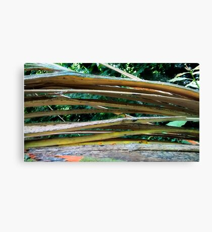 Cracking Branch  Canvas Print