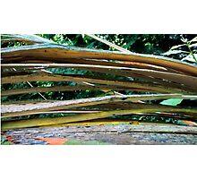 Cracking Branch  Photographic Print