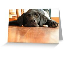 Dog Days of Summer! Greeting Card