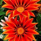 Flowers in the garden by poppyflower