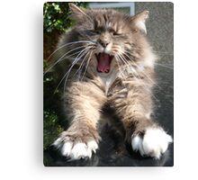 Monkey yawn Canvas Print