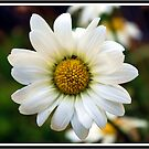 Daisy Alone by Mattie Bryant