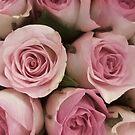 Rose Garden by Christy Leigh