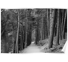 Pathway Through the Trees Poster